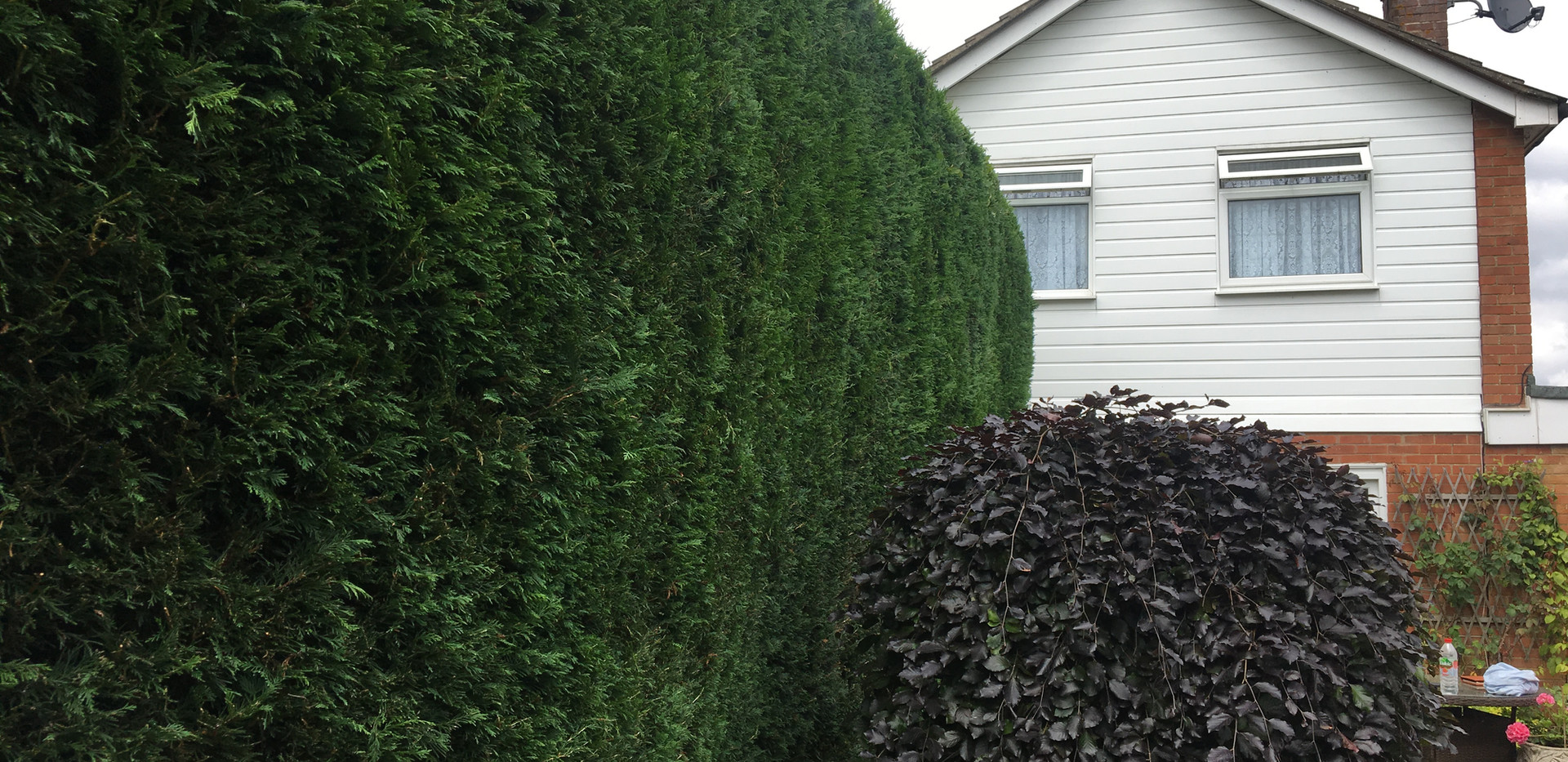 Bennetts Tree Care hedge trimming