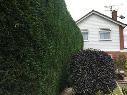 Bennetts Tree Care 027