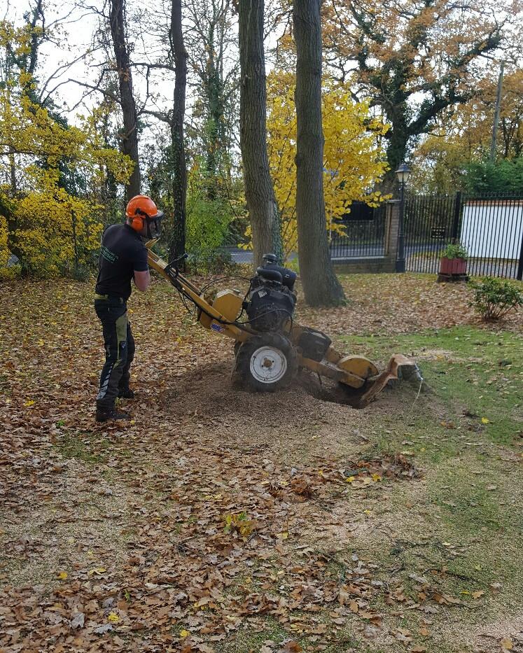 Bennetts Tree Care stump grinding
