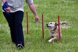 ANIMAL BEHAVIOUR CORK_012.jpg