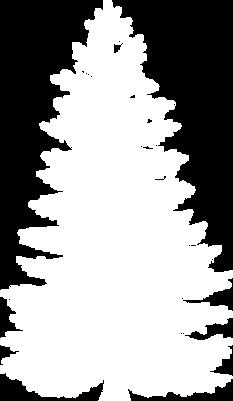 fir-tree1.png