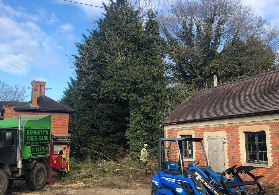 Bennetts Tree Care tree services