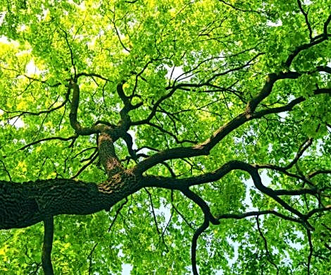 Bennetts Tree Care Tree Felling.jpg