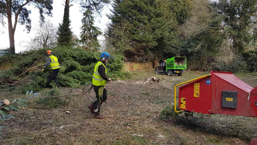 Bennetts Tree Care site tree clearance