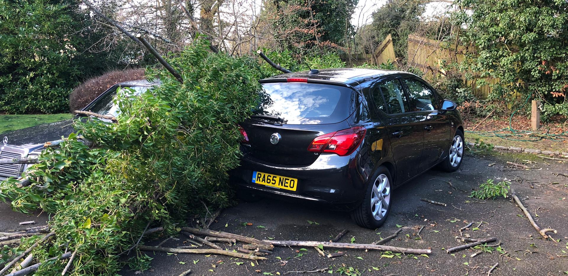 fallen tree in winds wokingham