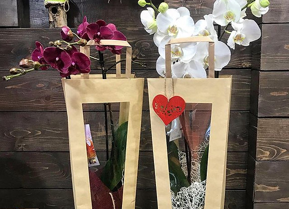 Orchids in Bag