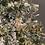 Thumbnail: Nome intagliato in plexiglas oro
