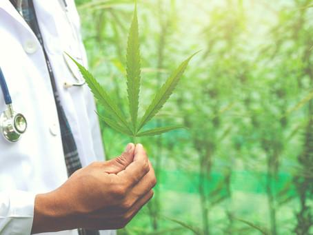 Cannabis medicinal: una alternativa natural para el tratamiento del dolor