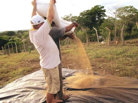 El campo sucreño recibe la aprobación de 14 alianzas cofinanciadas para su fortalecimiento