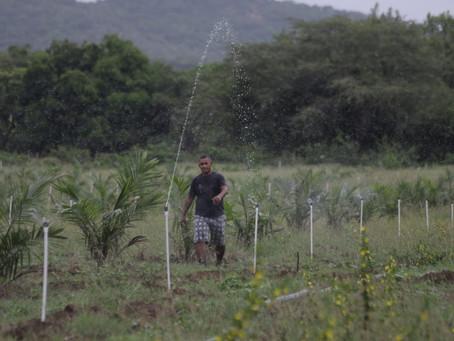 Agricultores en el Atlántico beneficiados con la siembra de palma de aceite