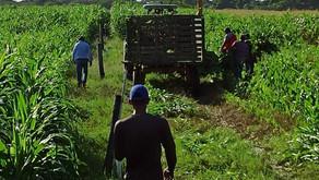 75 Mipymes del sector agro en el Atlántico tendrán acceso a servicios de innovación