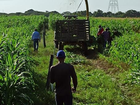 Revolución agroindustrial en el Atlántico: acceso al agua, financiación y asistencia técnica
