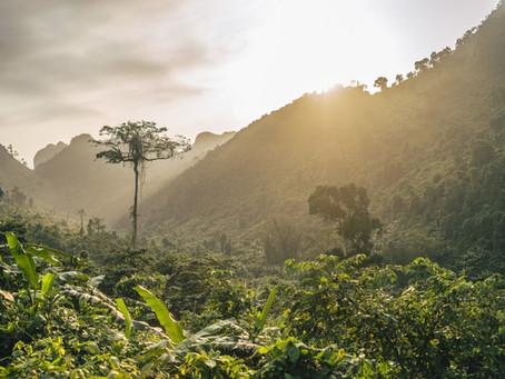 US$ 20 millones serán destinados por el BID para proteger a la Amazonía