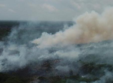 Alcalde Pumarejo propone soluciones para detener incendios en Isla Salamanca