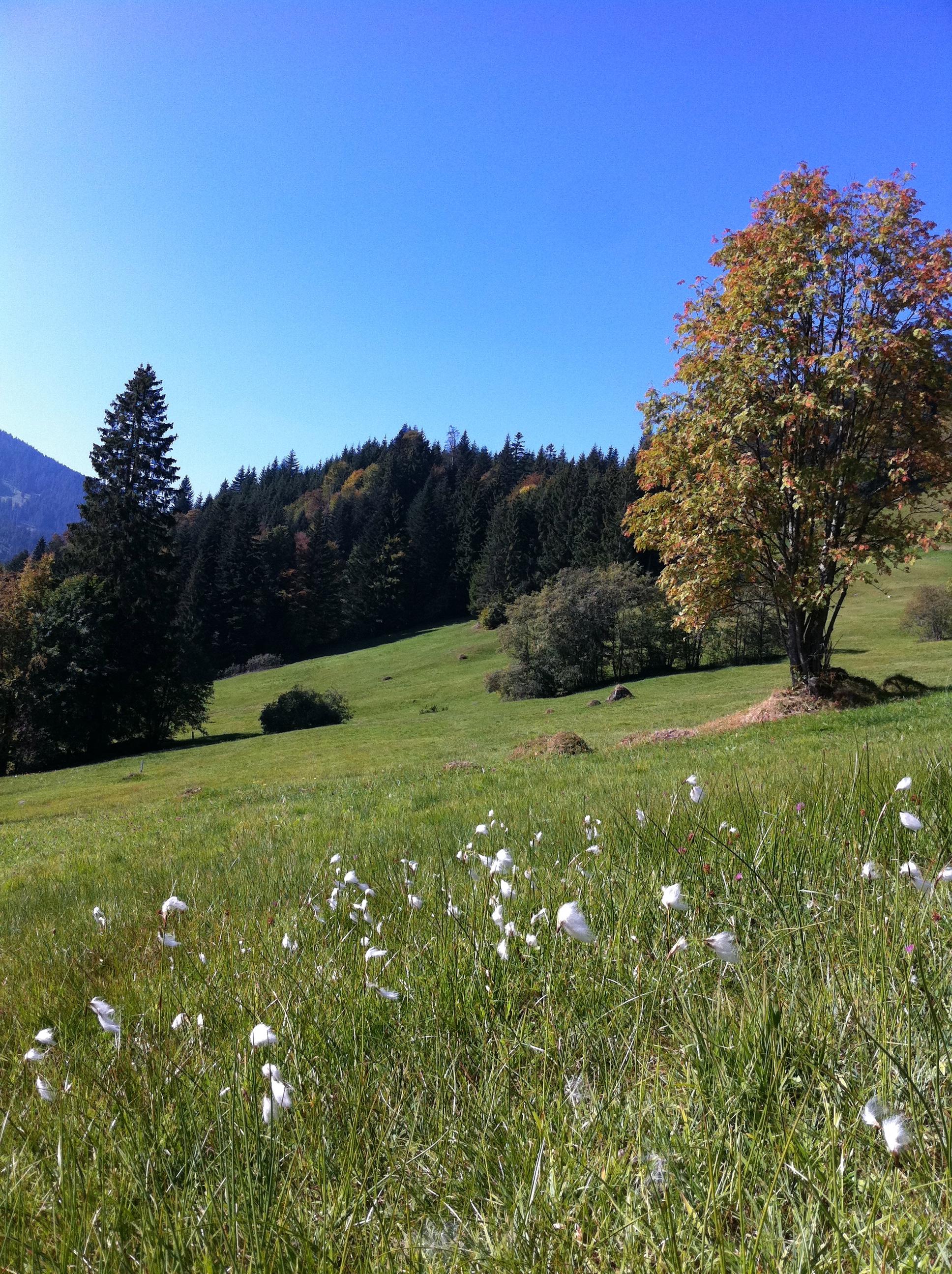 Schorieder Alpen