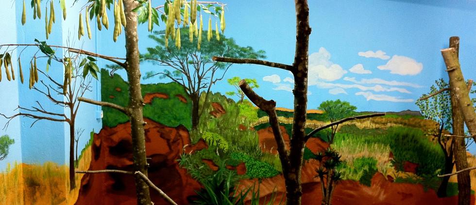 Der Johannisbrotbaum