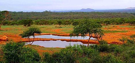 Typische Savannenlandschaft
