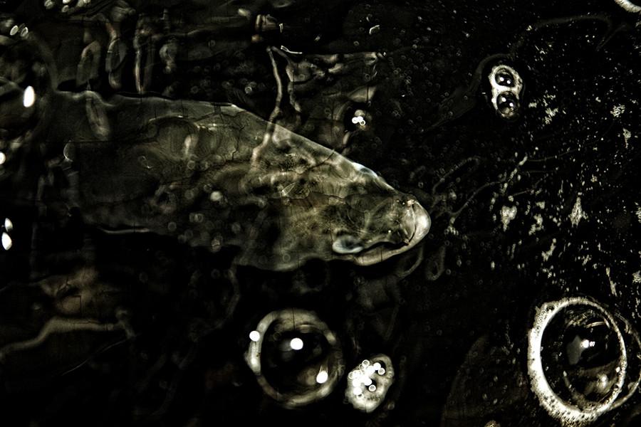 The last fish on earth