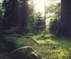 skog.jpg