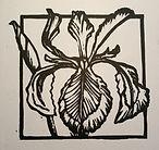 Iris linoprint.jpg