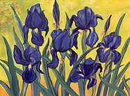 Irises KN.jpg