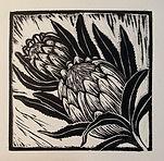 Protea linoprint.jpg