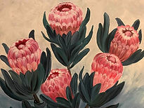 Protea painting KN_edited.jpg