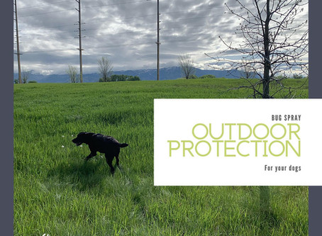 Outdoor Protection For Your Dog