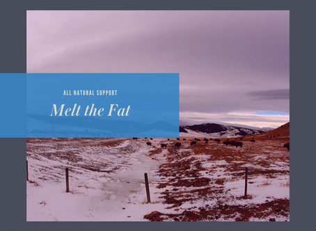 Melt the Fat