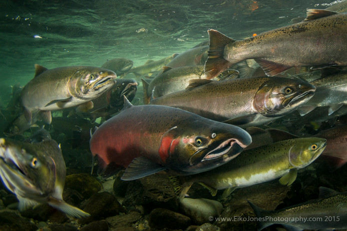 THE SALMON FEEDS THIS PLACE