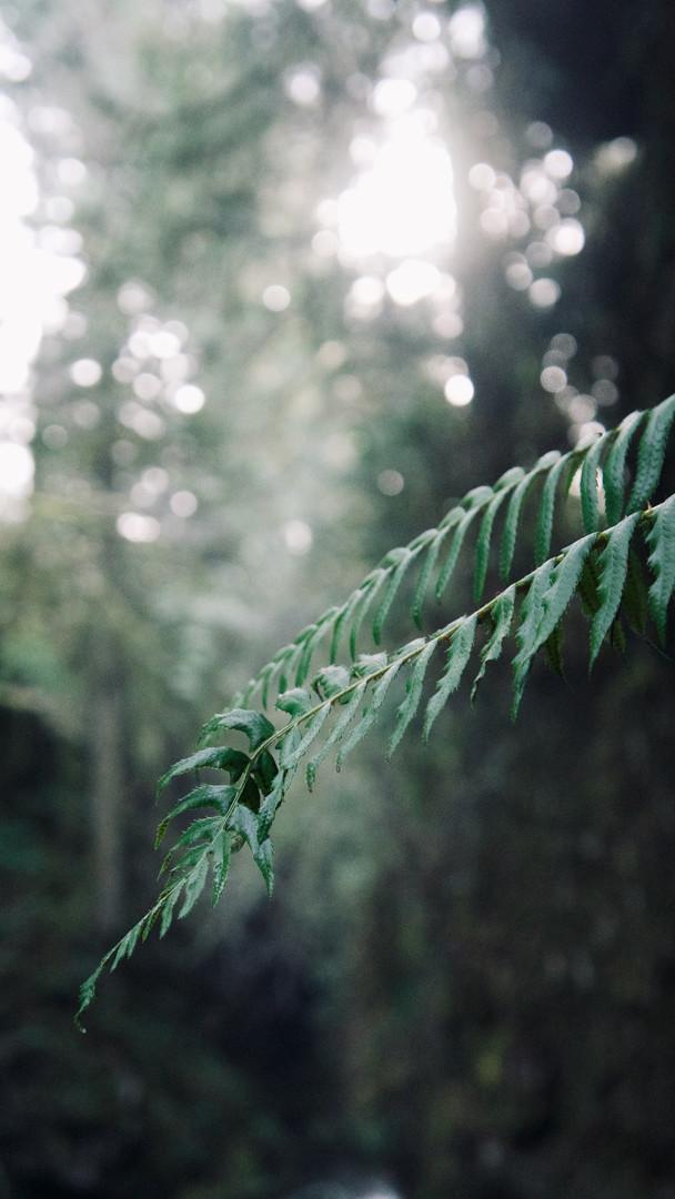 Ferns, Squamish, British Columbia