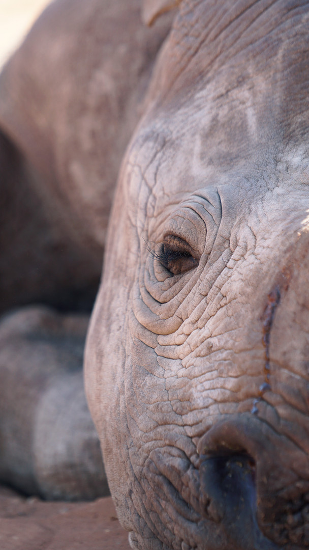 Micky, Rhino Pride Foundation, South Africa