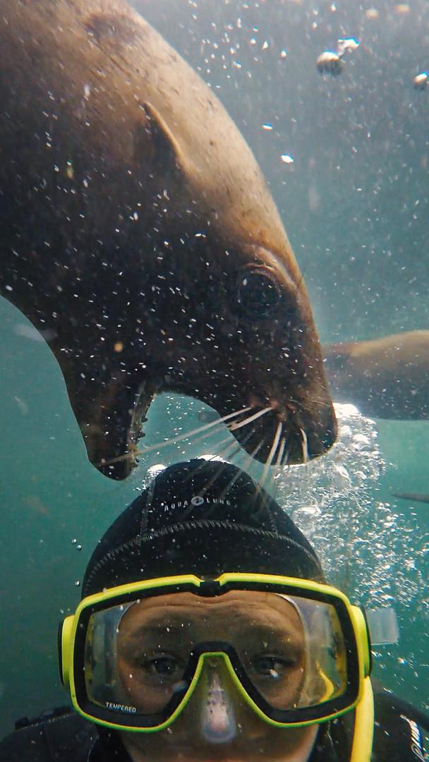Sea Lion Dive, Horby Island, British Col