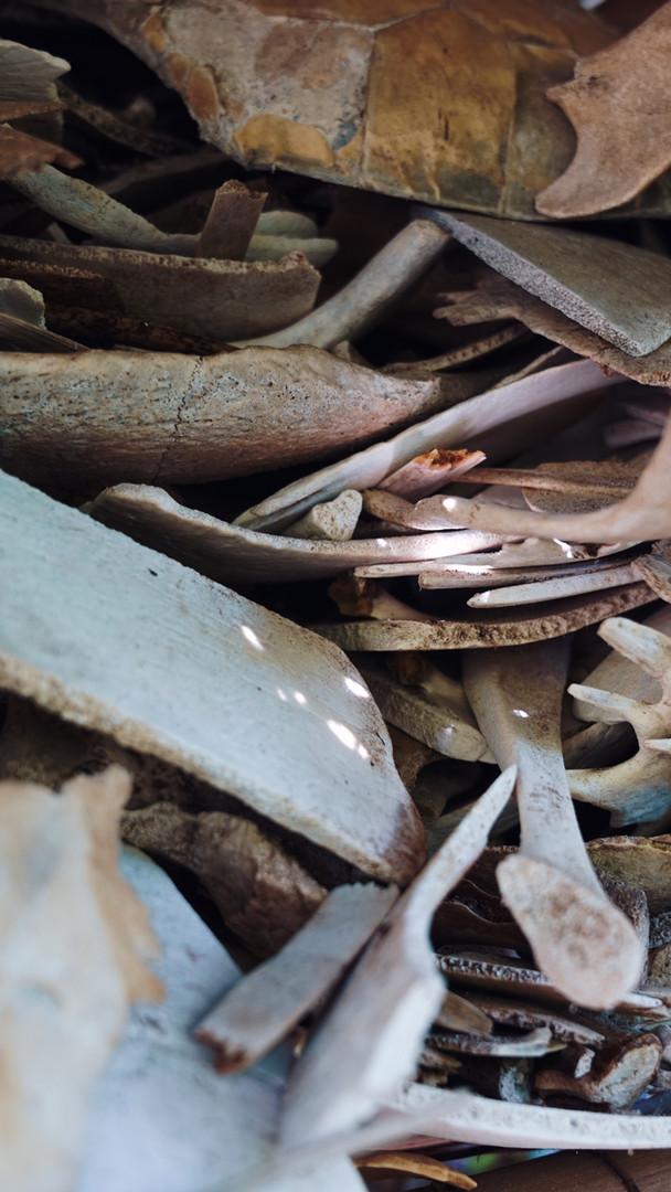 Skeleton Shells, Watamu, Kenya