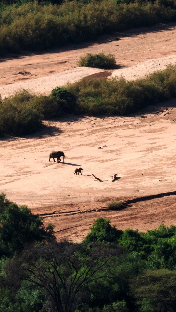 Above Elephants, Kenya