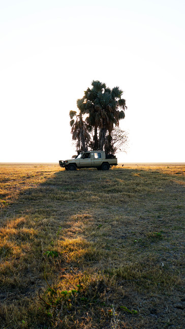 Stopping at Lone Palm, Liuwa, Zambia