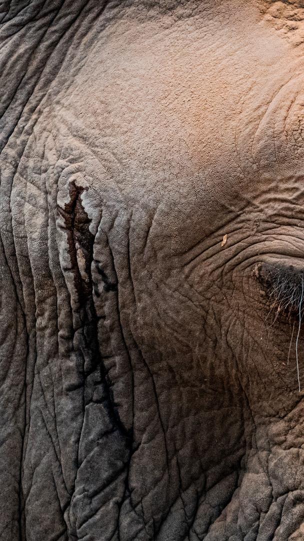 I, Elephant, South Africa
