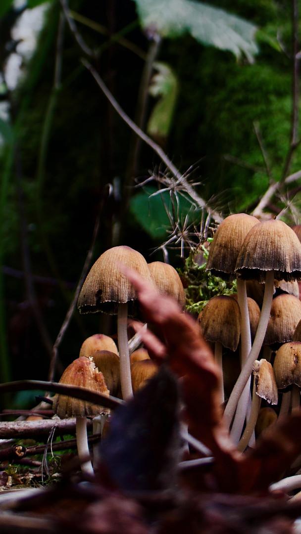 Fungi, Campbell River, British Columbia