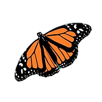 MM%20Butterfly_edited.png