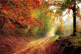 mejores-bosques-visitar-otono-2018.jpg