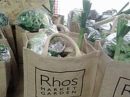 veg-bags.png