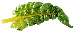 spinach-leaf.png