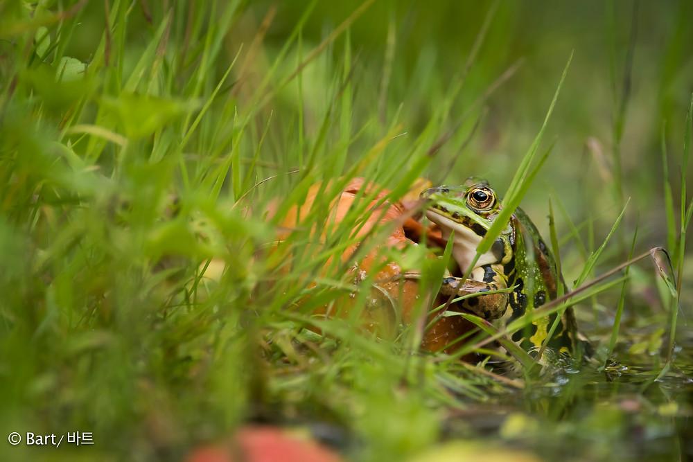 Frog climbs apple