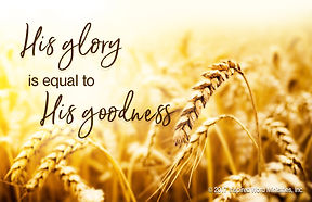 wheat, God's Word, Word of God, God's goodness