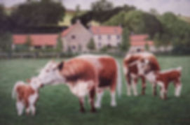 We have been breeding Longhorns at Red House Farm since 1996.Longhorns Red House FarmLonghorn Heifers Rosie & Renie with calves Amy & Angel from a painting by Rex Nicholls