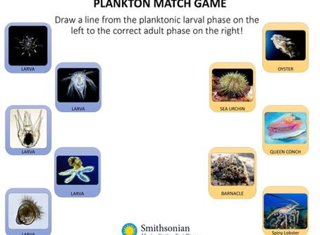 Plankton Matching Activity
