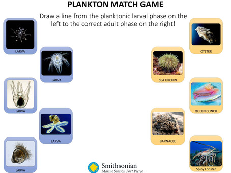Plankton Matching Activity