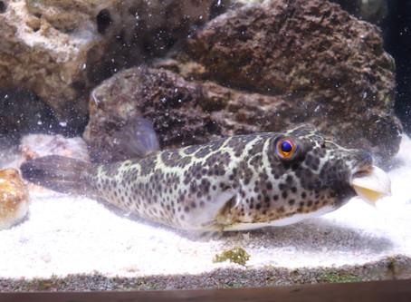 ELC Aquarium Feeding 101