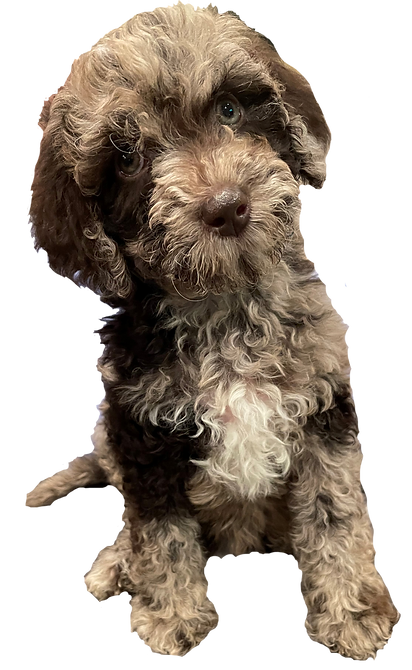 picture-puppy2_edited.png