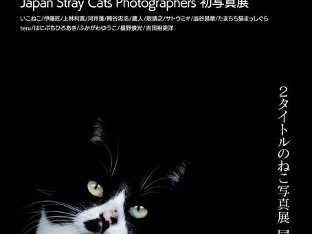 池袋ギャラリー路草ねこ写真展の出展作家に選出されました。